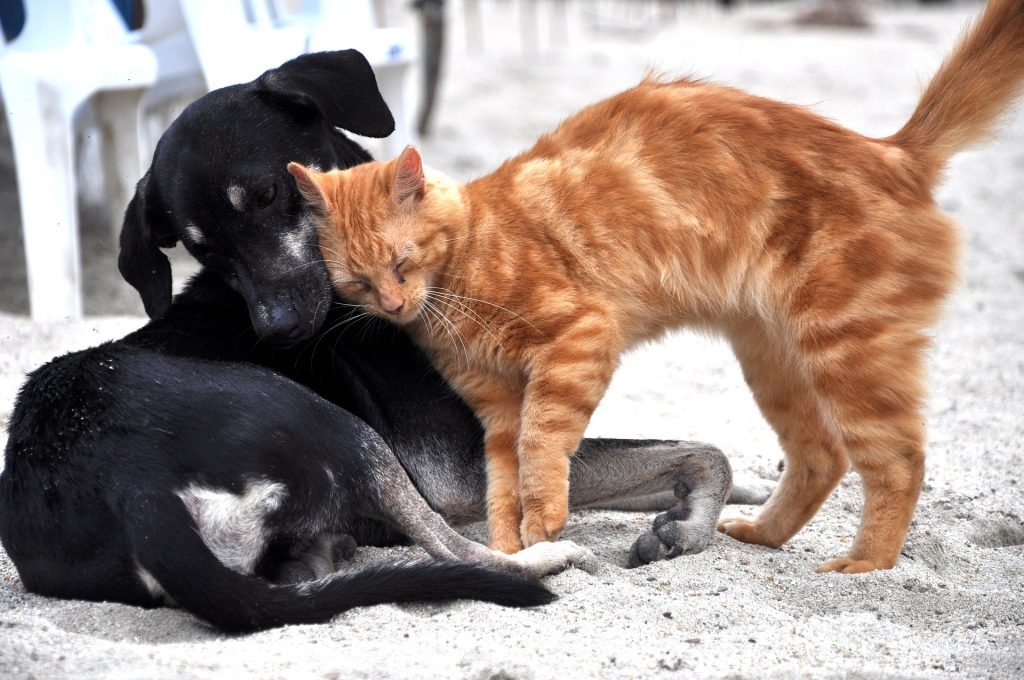 Cão e gato a brincarem