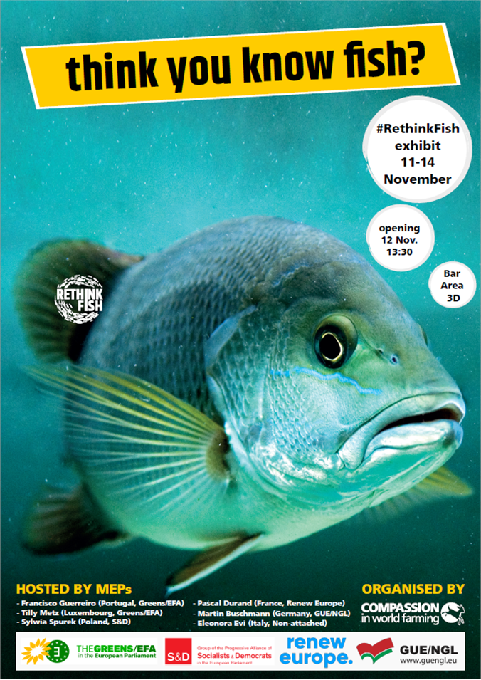 Cartaz Rethink Fish