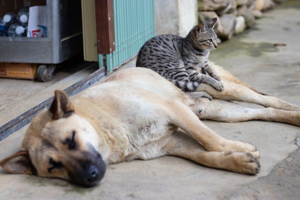Animais Gato Cão Rua