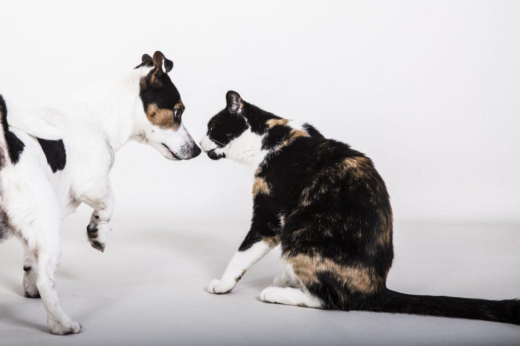 cão gato