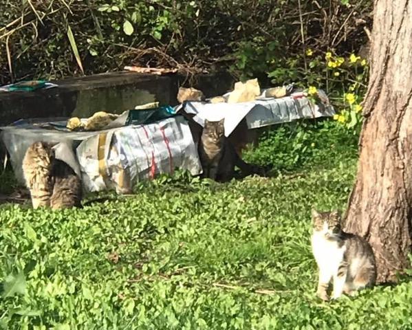Colónia de gatos benfica