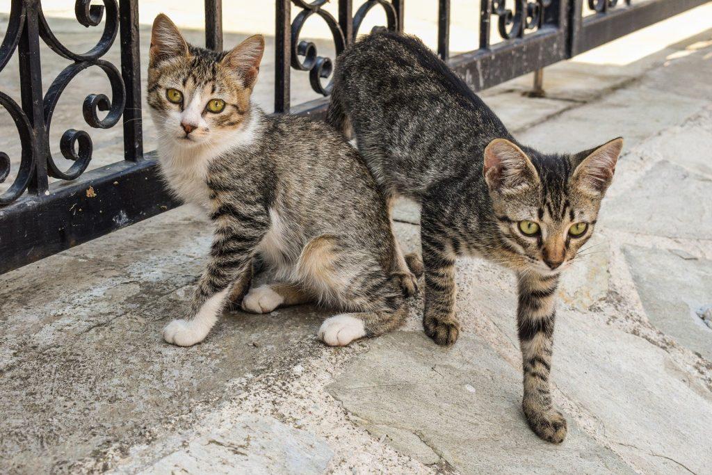 Gatos de rua
